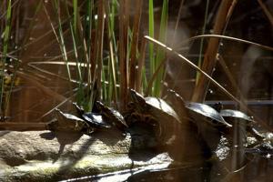 Actividades de Aula Natura en el Parque Natural del Marjal de Gandia este fin de semana
