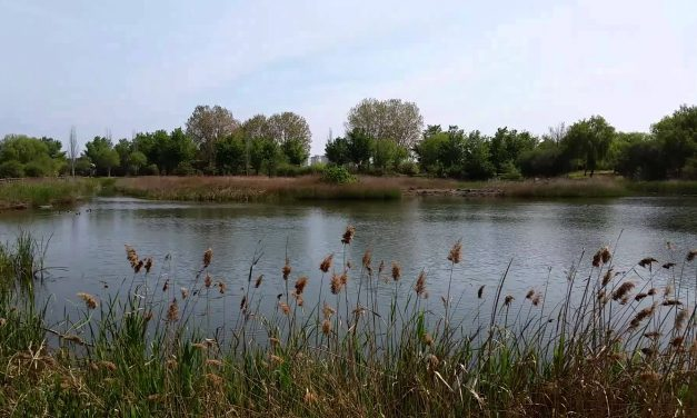 PlatjaNatura, decubriendo el entorno natural de Gandia