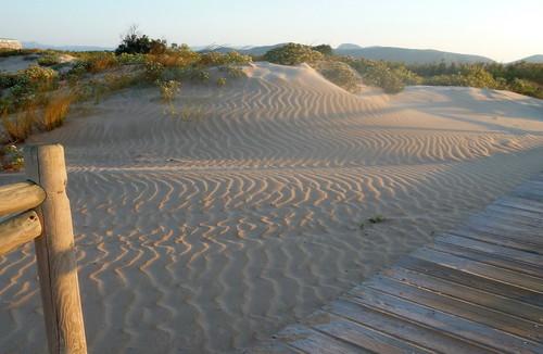Excursión PlatjaNatura a las dunas de L'Auir