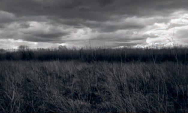 Eduard Ibáñez expone «Mimesi, ficcions del paisatge»