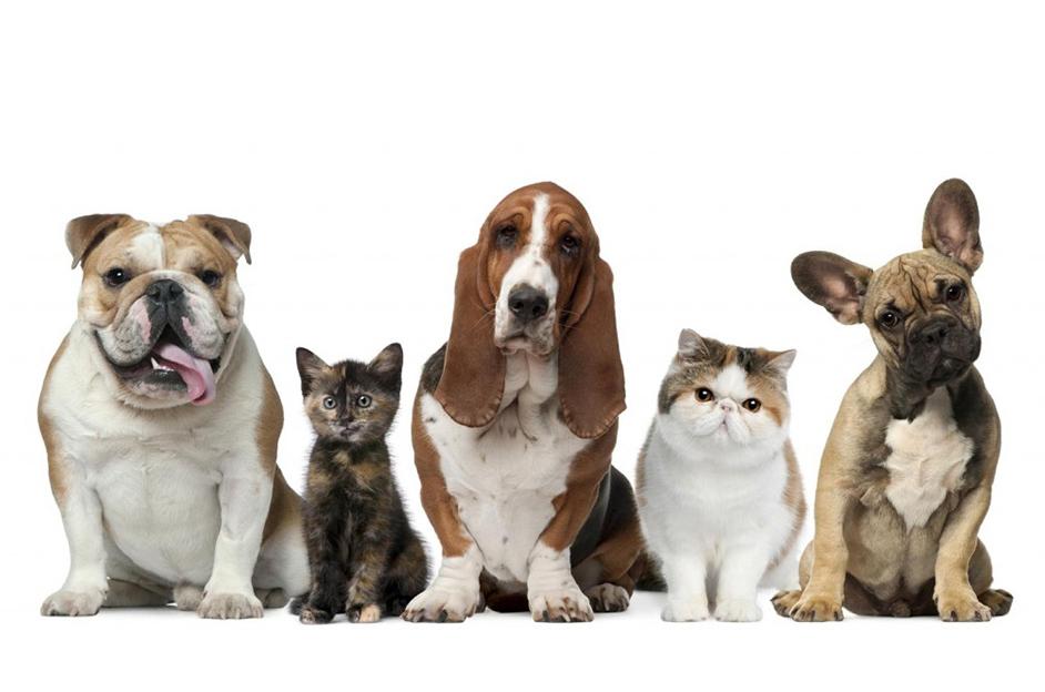 Feria dedicada a las mascotas en Fira Mercat Gandia