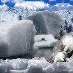 Exposición Itinerante «El Ártico se rompe»